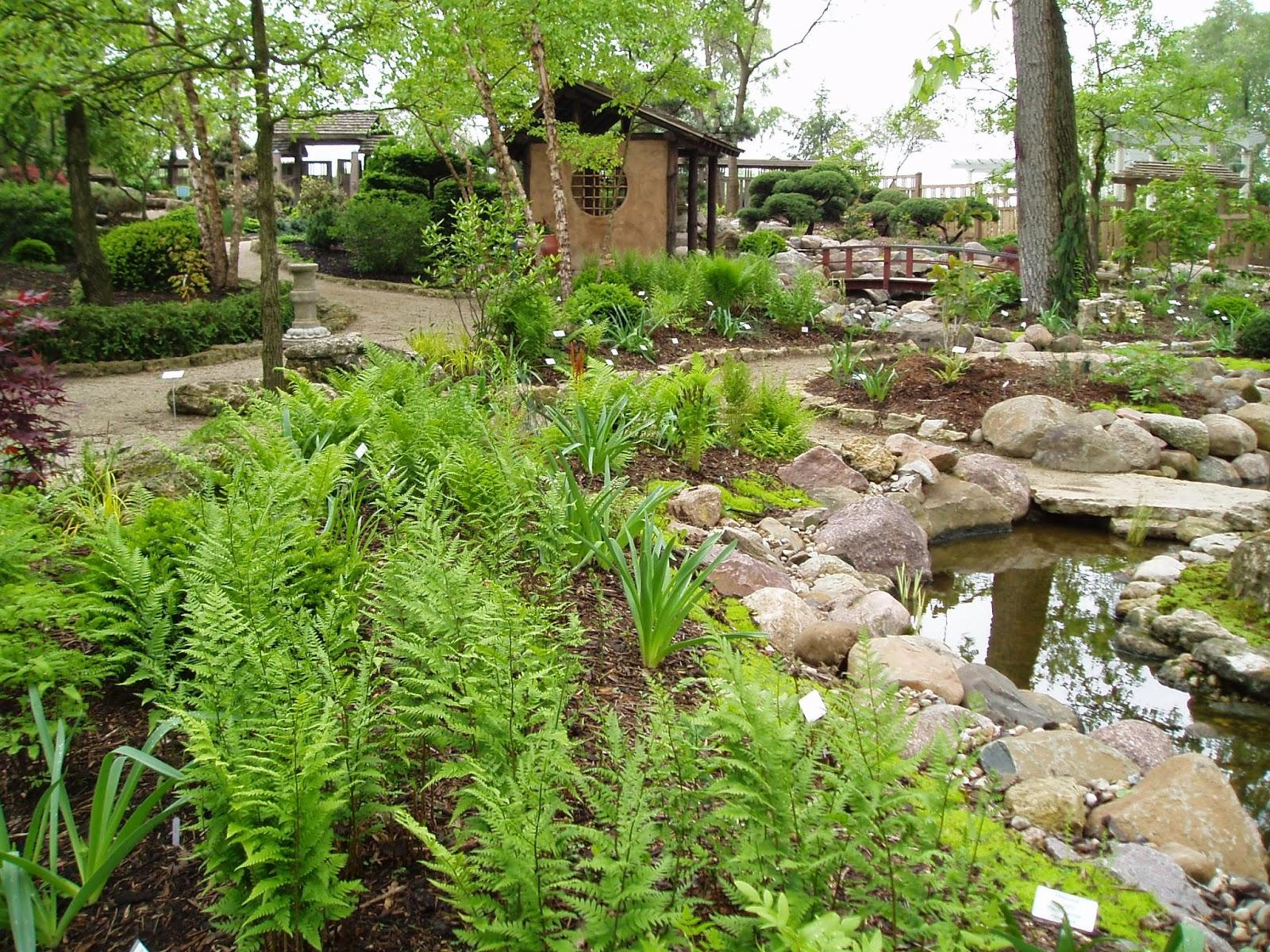 Rotary botanical gardens hort blog history of the fern for Garden trees kent