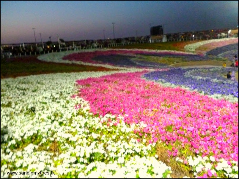 Dubai Miracle Garden phase two