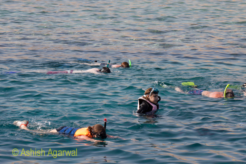 Girl standing up in the water while the rest of the tourists face down during snorkeling near Sharm el Sheikh