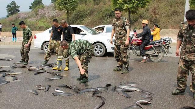 عجائب الدنيا وهل تعلم - السماء تمطر أسماك في تايلاند والهند