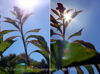 wollam gardens, nature, flowers, instagram, anniversary, butterfly, macro photography, photoblog, Photographer, Photography, Virginia photographer,