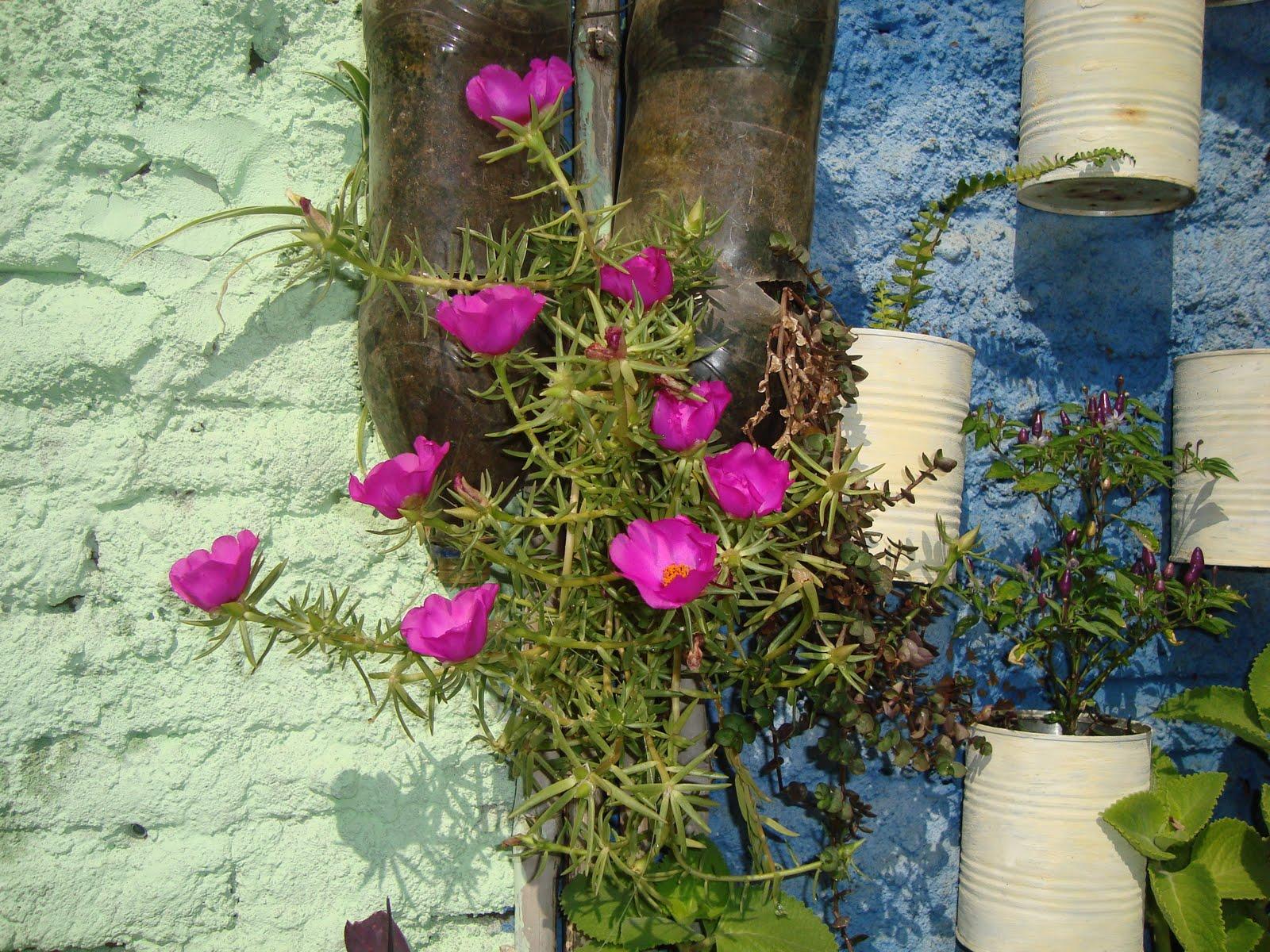 plantas para jardim vertical de garrafa petCoisas de Mulher JARDIM