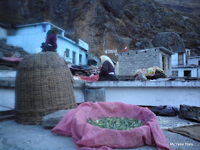 Village Women of Mana busy in their daily chores in the Himalayas