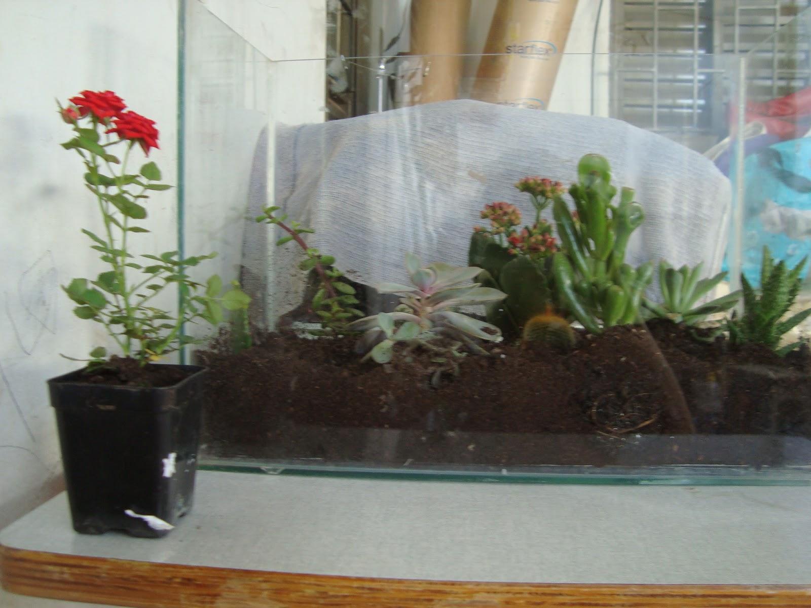 é muito gostoso o processo de fazer e cuidar desse mini jardim