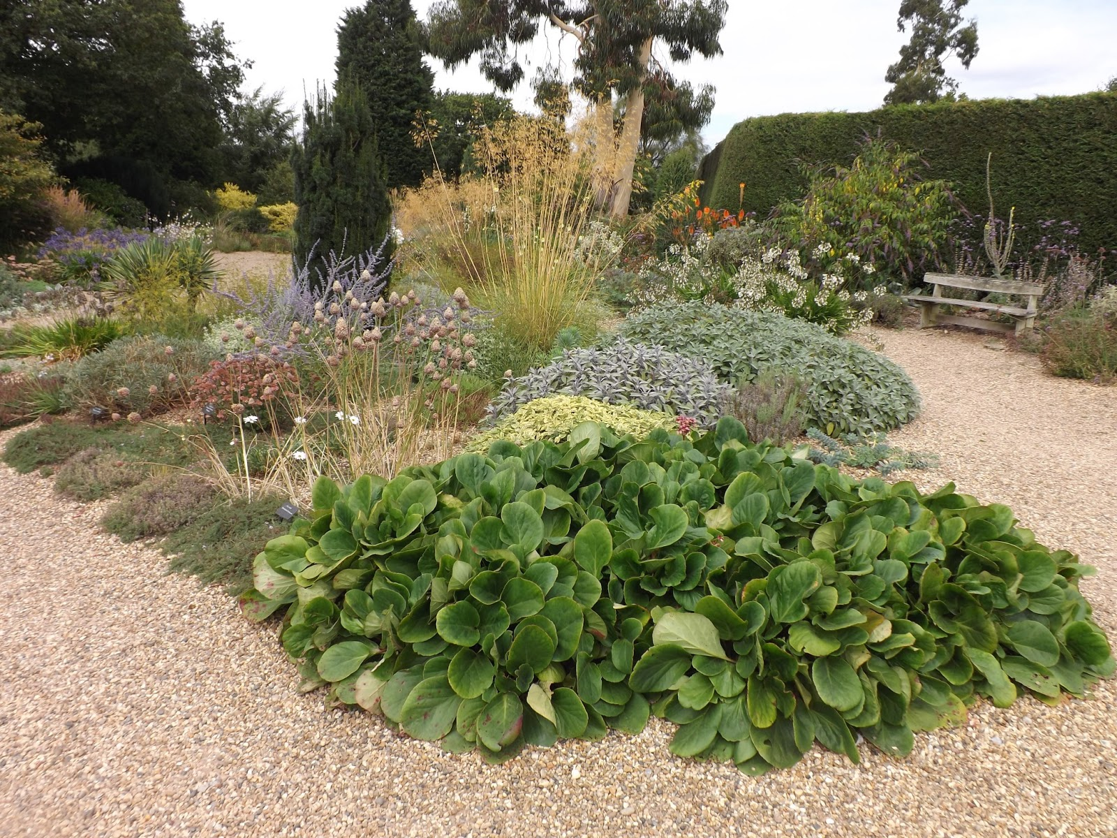Ramblings from an english garden beth chatto 39 s garden part 1 for Garden pond gravel