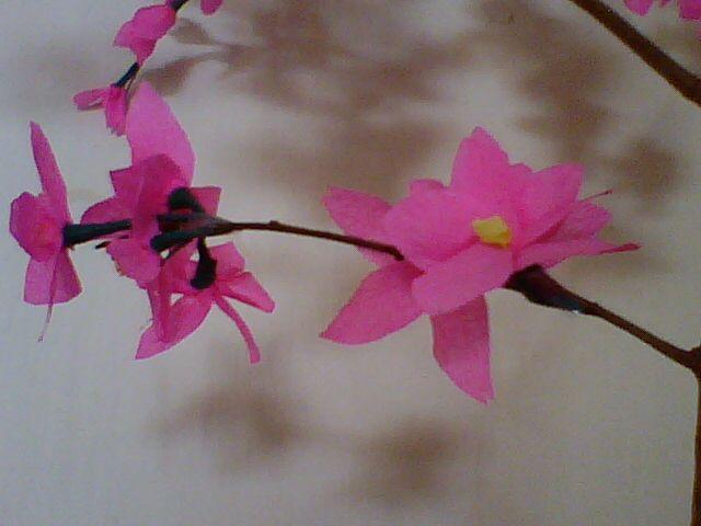 Lalu Tanam bunga yang sudah di buat kedalam wadah bekasatau pot bekas