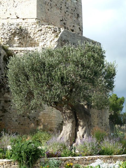 Il tait une fois un jardin romain for Jardin romain