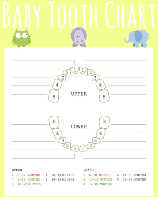Teething tips, Teething Isn't For Babies Gift Basket, creative baby shower gifts, Teething truths, #TeethingTruths, Baby Teeth Chart, Baby teething chart, free baby teeth printable, Teething chart