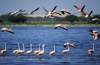 imagen de aves    flamencos