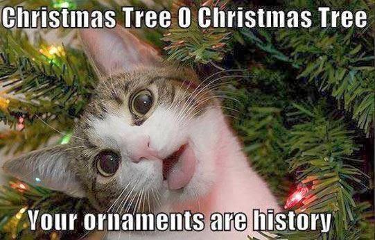 Cat Looking At Christmas Ornaments Meme