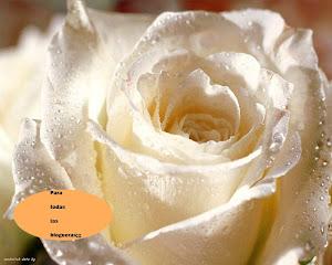 Esta rosa blanca nos la regala nuestra amiga  Nely