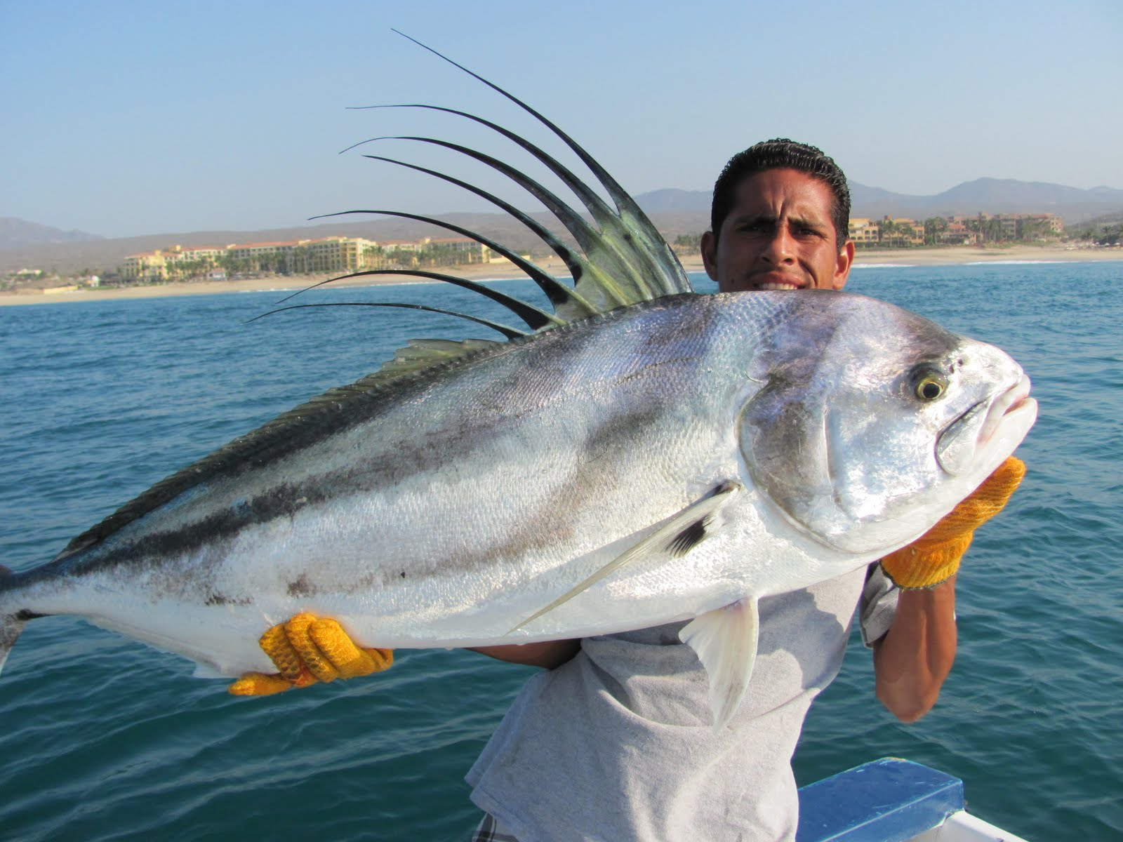 Redrum sportfishing fish report jun 24 2011 for Rooster fish cabo