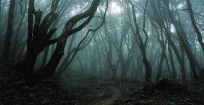 Hoia Baciu: Το μυστηριώδες δάσος της Ρουμανίας
