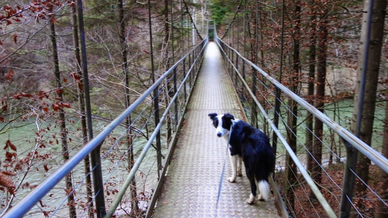 Bilder und Texte zu meinen Wanderungen mit Hund: Zum Bruedertöbeli ...