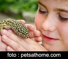 7 Hewan Peliharaan Terunik, leopard gecko