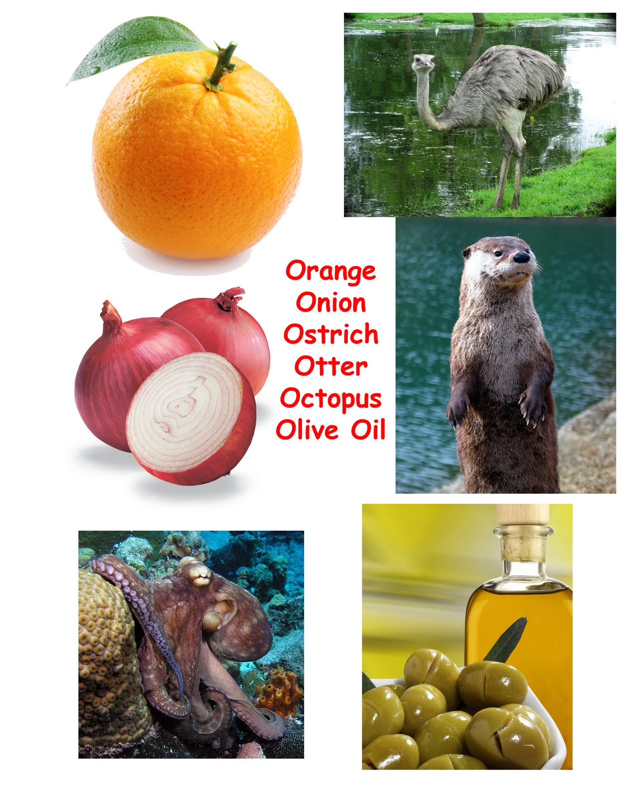 Objects Starts with Letter O http://learnthefunway.blogspot.com/2011/10/resource-pictures-of-objects-start-with.html