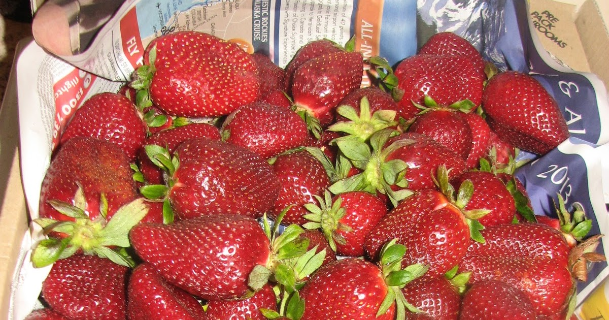 investigatory project on food preservation pineapple and apple jam Diy projects food  if you're forever on the hunt for new ideas in food preservation, this is the list for you  we use to buy strawberry apple jam but it is.