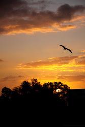Por muy larga que sea la noche, el amanecer llegará.