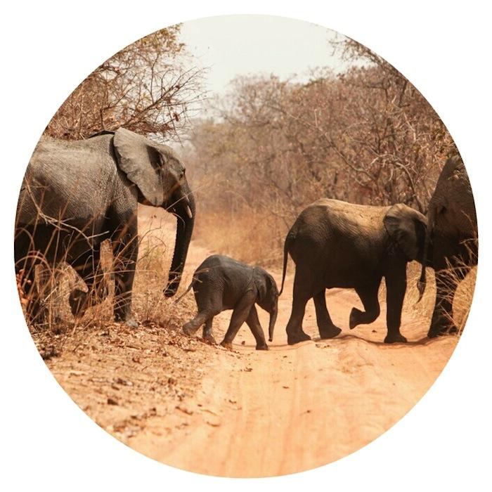 Save The Elephant!