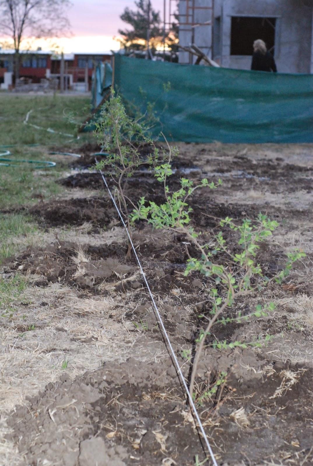 Estudio De Paisajismo Proyectos Jardines Privados
