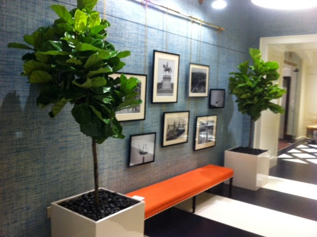 pdi plants blog designing with ficus lyrata within the