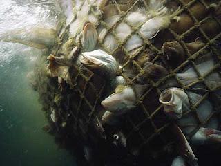 no a la sobrepesca