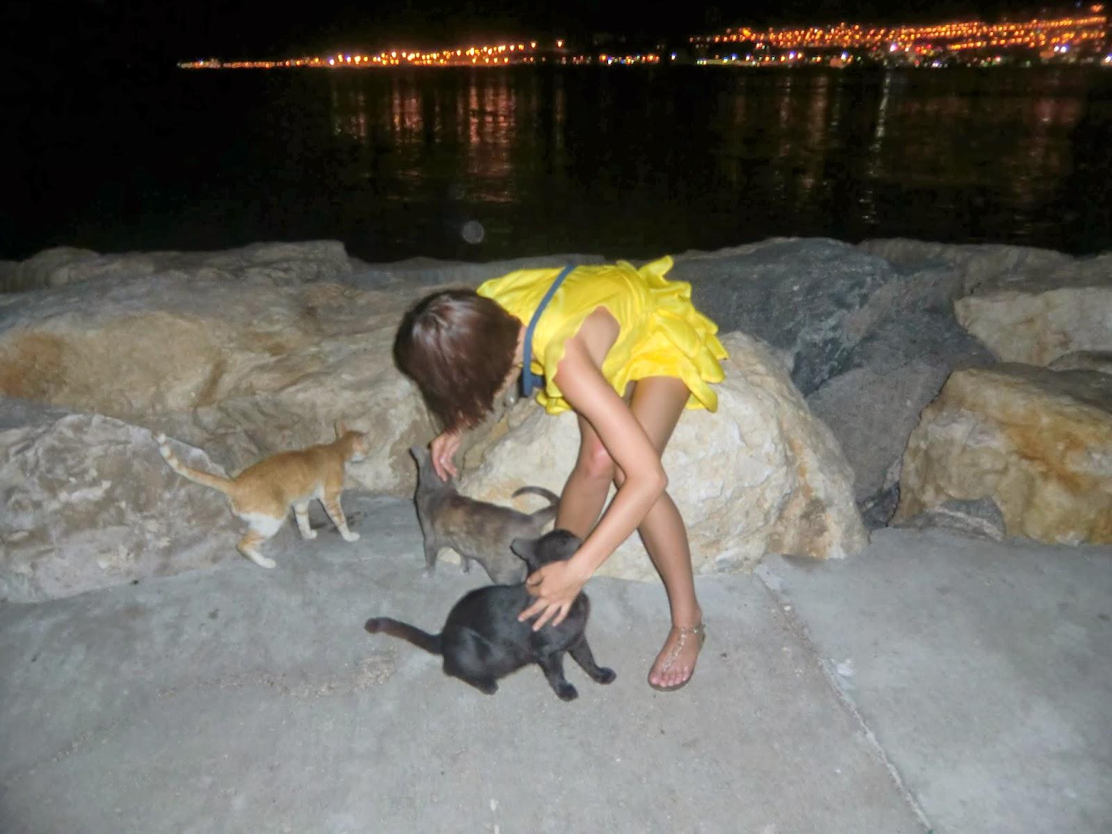 Кошки в Эйлате