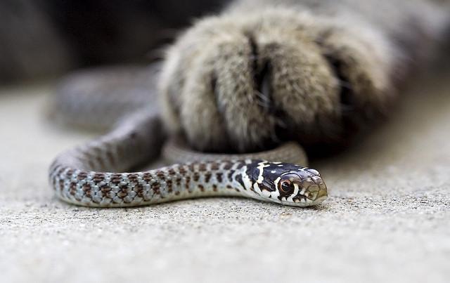 Snake фото