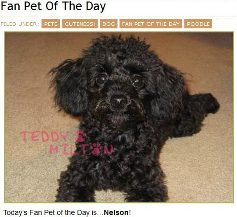 Nelson was Teddy Hilton's fan pet of the day