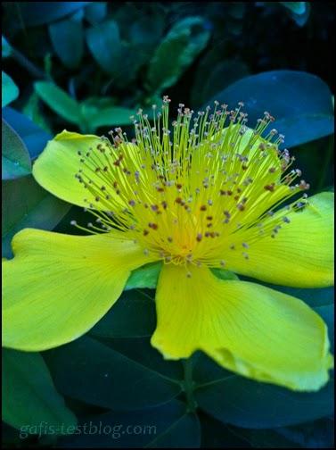 Gelbe Blütenschönheit