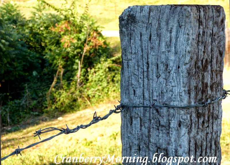Amish Fence Posts : Cranberry morning having amish for dinner