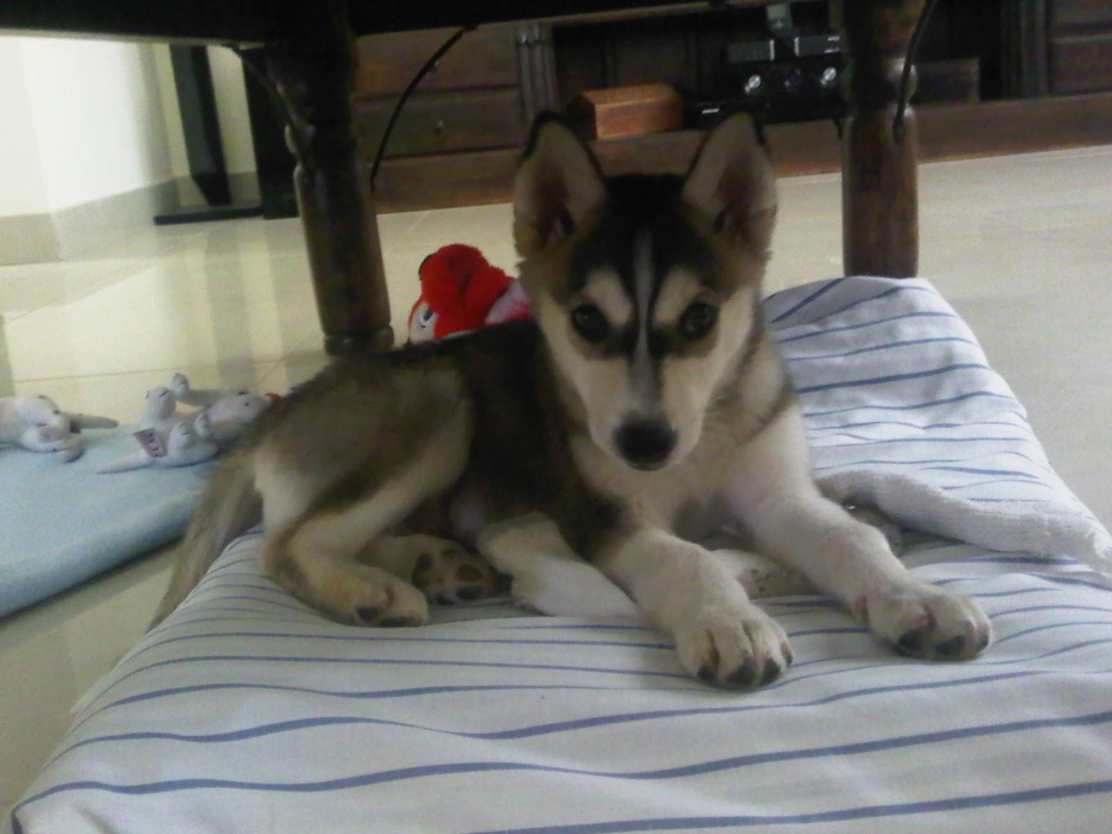 Shanuk; My Baby