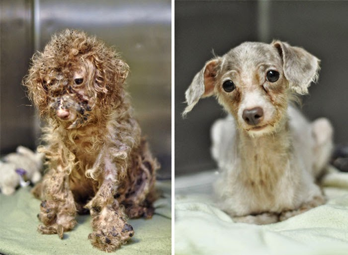 Little Betty - 16 Before-and-After Photos Of Rescued Dogs