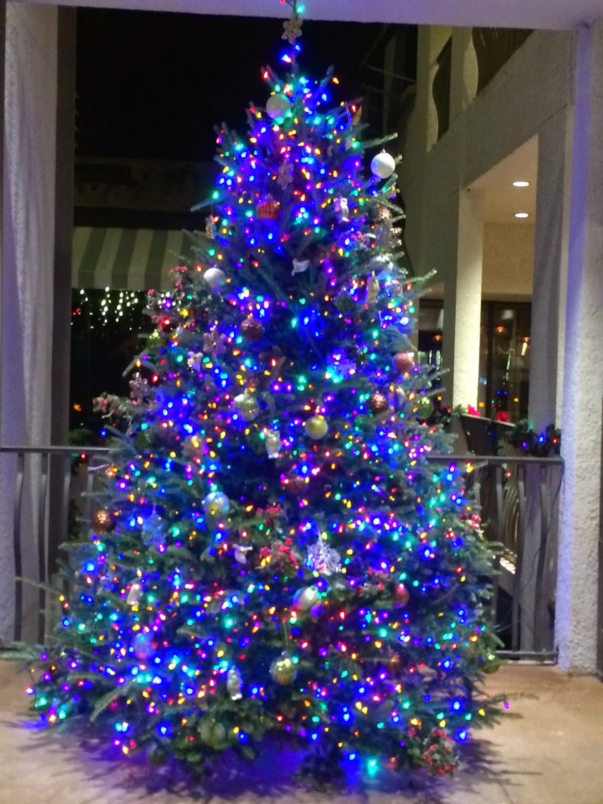 Dan Cirucci: Magical Island Glows With Christmas Spirit!