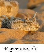 10 สายพันธุ์งูที่น่าทึ่ง horn vipor