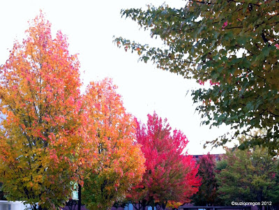 Fall trees in Beaverton park