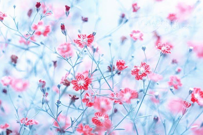 Florile gandului!