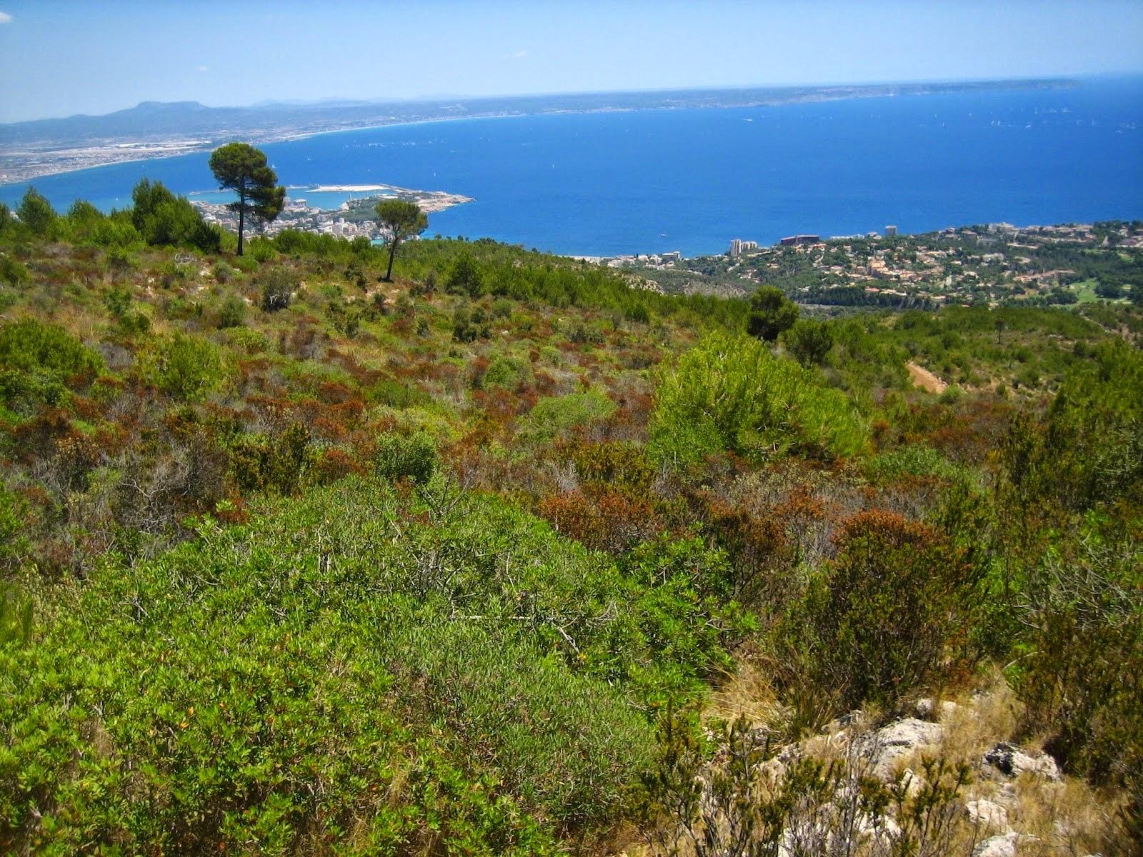 Regiones naturales mediterr nea - La mediterranea ...