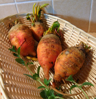 Golden Beets and Oregano in Basket