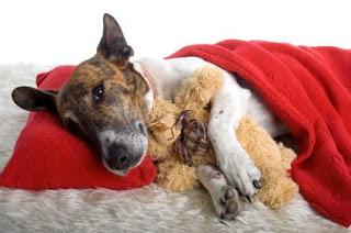 puppies  Diarréia em Cães Causas e Tratamentos