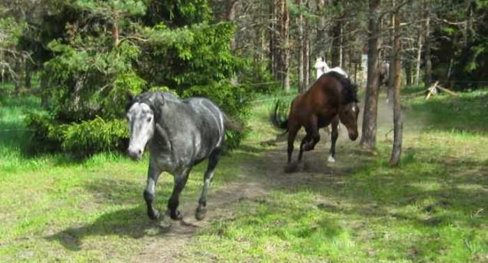 Några av klickerhästarna