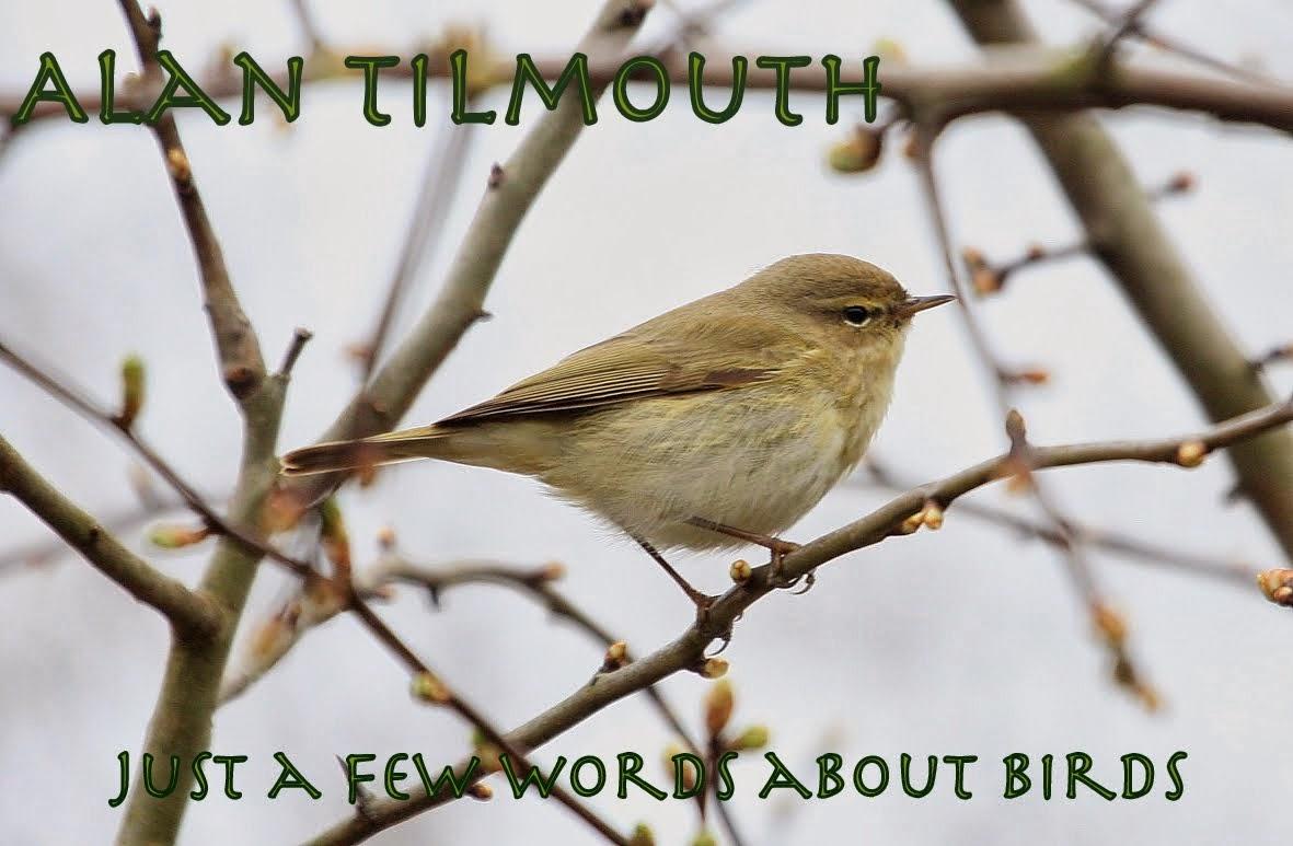 alan tilmouth