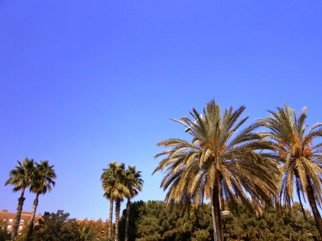 Palmeras, Barcelona -AcericoPop-