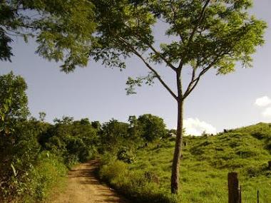 Ibicaraí - Bahia