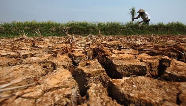 DPR Dorong Pemerintah Beri Pembinaan Tentang Iklim Kepada Petani