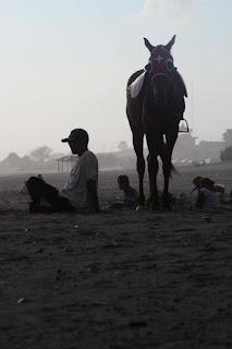 kuda delman wisata pantai parangtritis jogjakarta yogyakarta http://www.wisataarea.com/