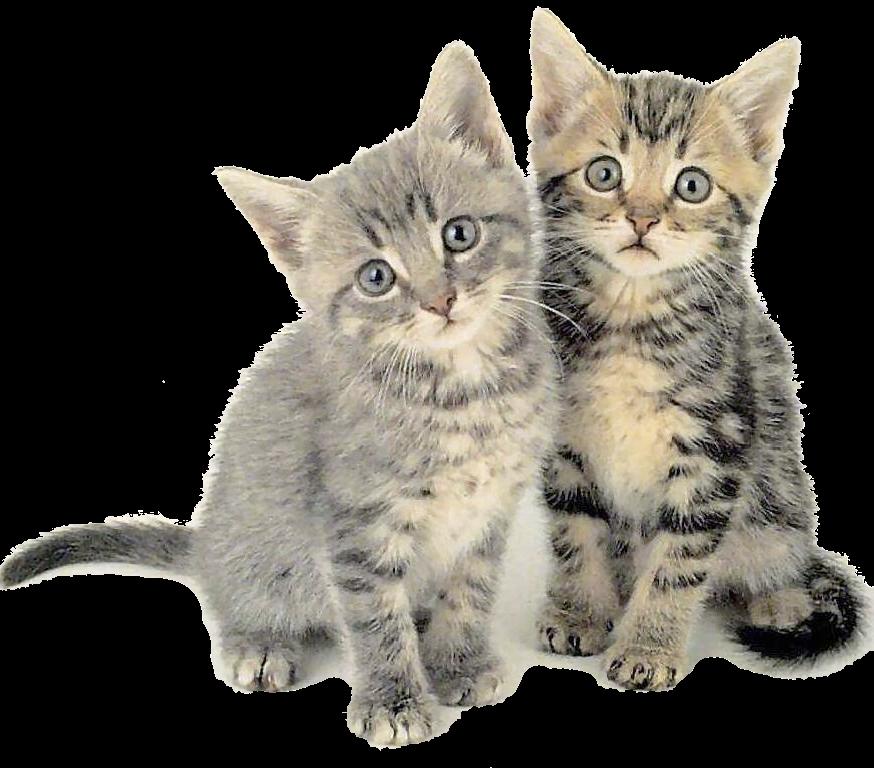 Hun cimi recursos im genes de animales for Red transparente para gatos