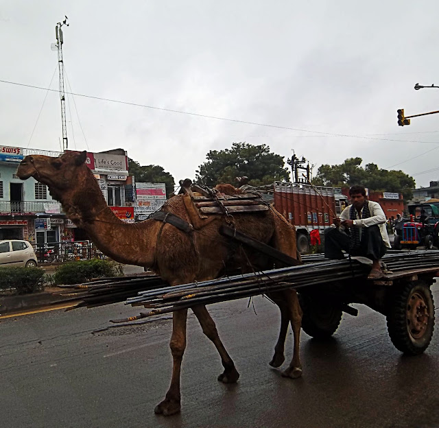 camel cart in Rajasthan, India