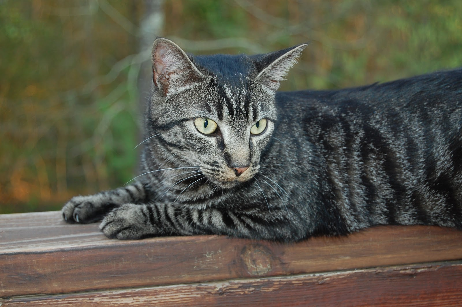 Image result for Happy birthday to stripes cat
