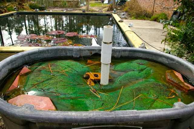 Homemade pond filters 5 gallon homemade free engine for Biofilter for koi pond